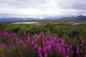 Alaska_DayNine_903.JPG