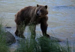 Alaska_DayThirteen_1660.JPG