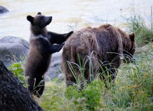 Alaska_DayThirteen_1662.JPG