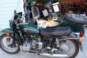 Jim Jewell's Ural and his dog in the sidecar.